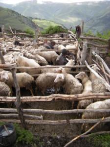 Silné setkání s místními pastevci