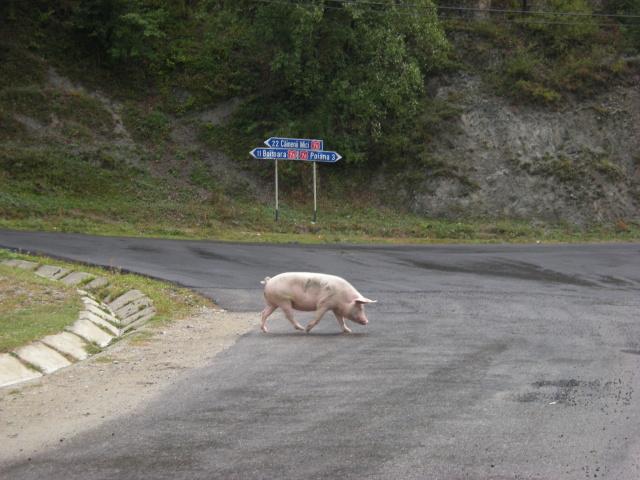 Cestou jsme museli občas dávat přednost. Vzadu je ukazatel na Poianu - Dlouhou ves. Ta nás pěkně zbourala. Jelo se po kamenech mezi psi, krávami, prasaty a dáčiemi asi 10 km.