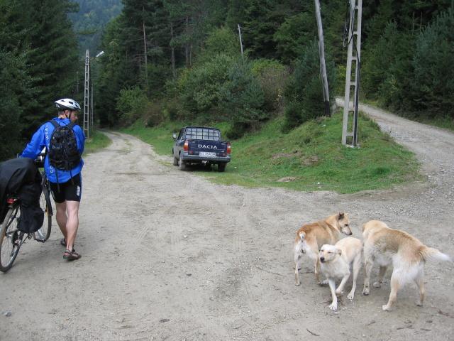 Na rozcestí se kolem nás motá banda psů.